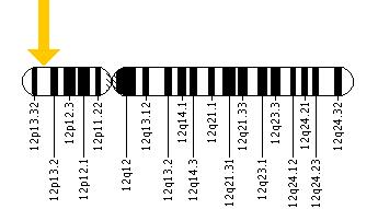 location of the CACNA1C gene