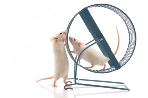 mice exercising