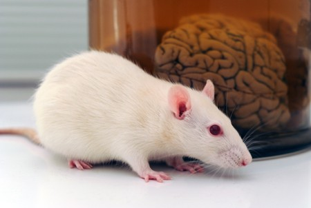 epigenetic changes to mouse brain cells